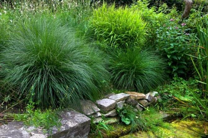 Najpiękniejsze trawy o dekoracyjnych liściach