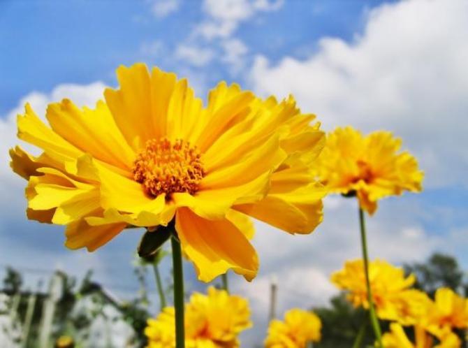 Nachyłek - uprawa, pielęgnacja i odmiany