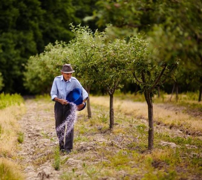 Nawożenie drzew owocowych