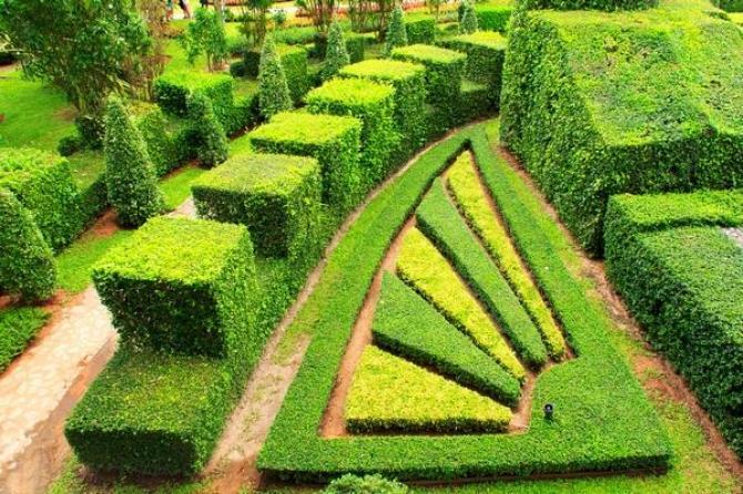 Bukszpan - uprawa, pielęgnacja i sadzenie