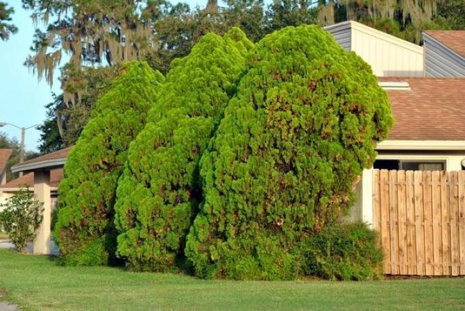Fytoftoroza  zwalczanie i leczenie roślin