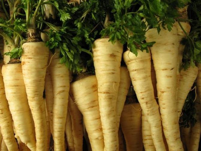 Pietruszka  uprawa, odmiany i właściwości