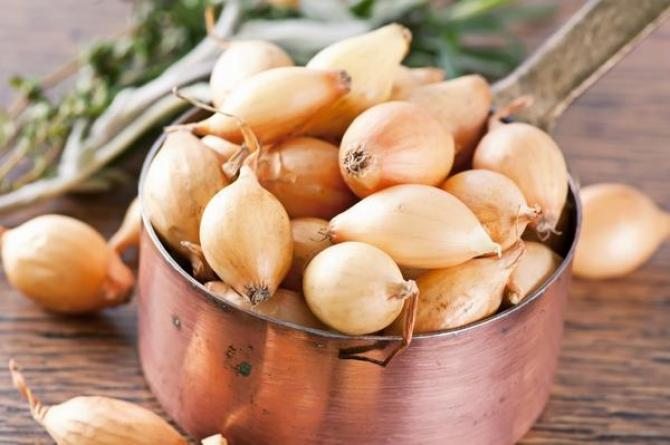 Cebula zwyczajna  zasady uprawy i najciekawsze odmiany