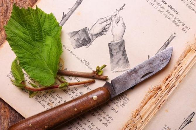 Jak pielęgnować szczepione drzewa owocowe?
