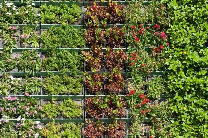 Ogród wertykalny  tajemnicze zielone ściany