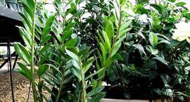Kwiaty doniczkowe w zimie – Jak pielęgnować rośliny w okresie jesienno-zimowym?