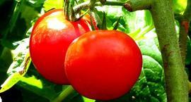 Warzywa ze szklarni