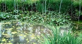Glony w oczku wodnym – zwalczanie
