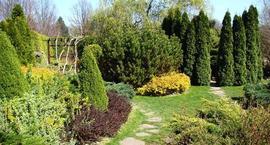 Krzewy ogrodowe