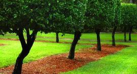 Drzewa ozdobne do ogrodu