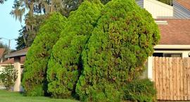 Fytoftoroza – zwalczanie i leczenie roślin