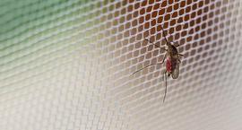 Skuteczne sposoby na komary
