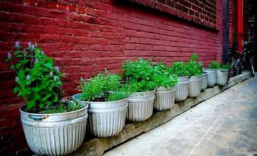 Uprawa ziół w domu i na balkonie