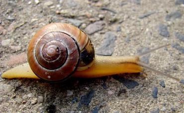 Ślimaki w ogrodzie - proste metody zwalczania ślimaków