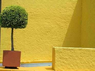 Drzewa i krzewy na balkon i taras