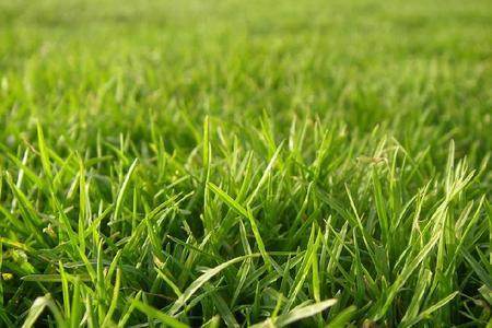 Zakładamy trawnik