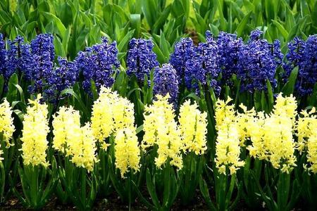 Intensywnie pachnące kwiaty w ogrodzie i na balkonie