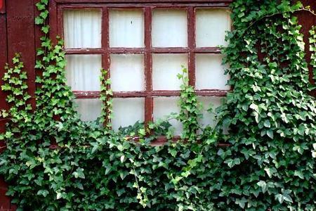 Wieloletnie i szybko rosnące pnącza na balkon