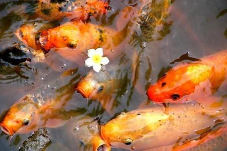 Zwierzęta w oczku wodnym