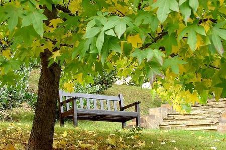Drzewa parkowe