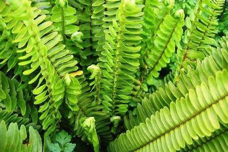 Zielone kwiaty doniczkowe