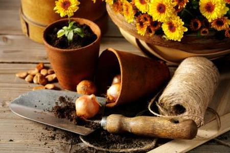 Sadzenie roślin - porady dla początkujących