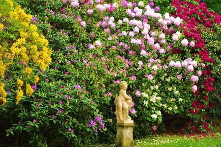 Różaneczniki i azalie - choroby i szkodniki