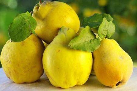 Pigwa - uprawa, pielęgnacja, owoce i odmiany