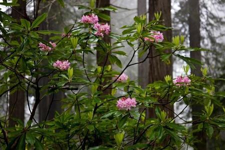 Kwiaty i rośliny do cienia