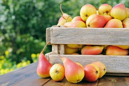 Przechowywanie owoców