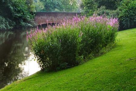 Jak prawidłowo pielęgnować trawy ozdobne w ogrodzie