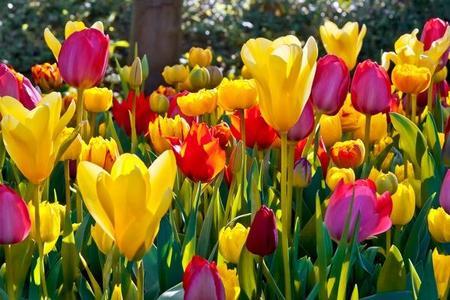 Wiosenne rośliny w ogrodzie