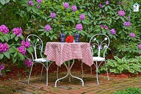 Choroby rododendronów – objawy i zwalczanie
