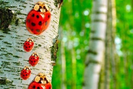 Duże drzewa liściasta i iglaste
