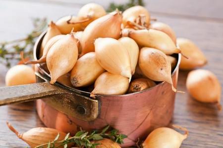 Cebula szalotka – uprawa, zastosowanie i odmiany