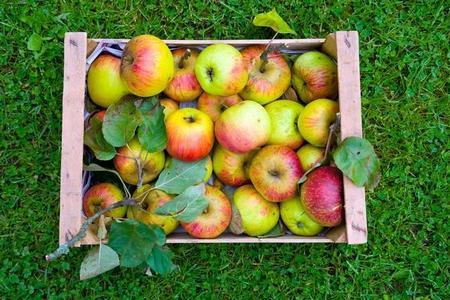 Przechowywanie jabłek