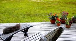 Jak pozbyć się mchu z trawnika