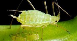 Choroby i szkodniki roślin balkonowych
