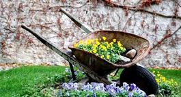 Klomb w ogrodzie