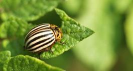 Skutecznie przeciw owadom - szkodnikom ssącym i gryzącym