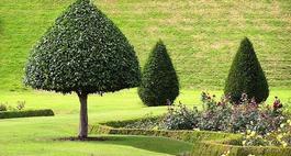 Nawożenie drzew i krzewów