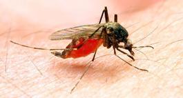 Oprysk na komary