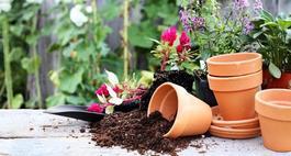Rodzaje gleby ogrodowej