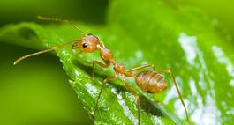 Sprawdzone sposoby na mrówki i owady w ogrodzie!