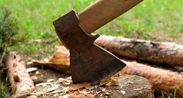 Karczowanie oraz wycinka drzew i krzewów
