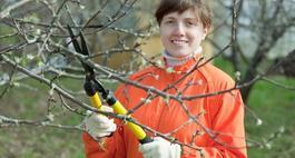 Kiedy przycinać drzewa owocowe?