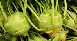 Kalarepa – uprawa i właściwości