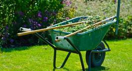 Jak założyć trawnik?