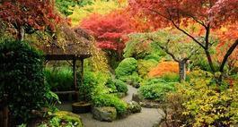 Jesień w ogrodzie - jesienne zdjęcia