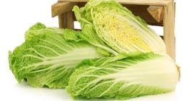 Kapusta pekińska - uprawa, odmiany i choroby